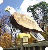 wooden eagle plans